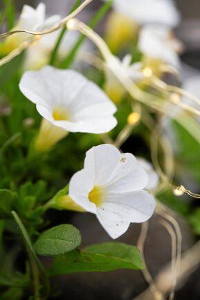 Nätta belysningsslingor intrasslade bland blommorna och grönskan i kruka, blir ljusglimtar när mörkret faller.