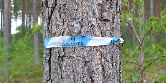 Bakläxa igen för Skogsstyrelsen