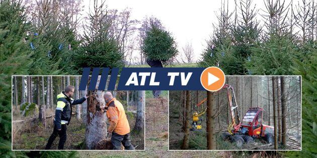 ATL TV: Stora skador efter barkborrarna