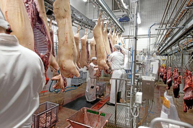 Skövde Slakteri ska enligt VD Tommy Ögren öka slakten av såväl gris som nöt under innevarande och nästkommande år.
