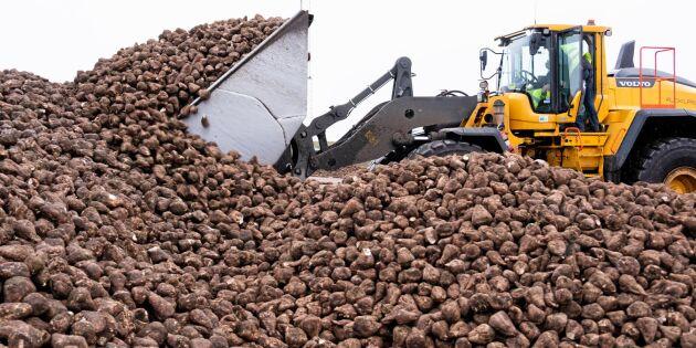 Kampen om sydsvenska odlare hårdnar