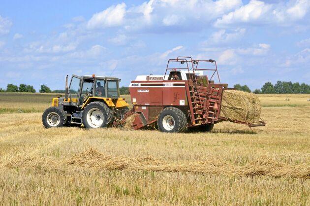 Bönder i 14 av 16 tyska delstater kvalificerar sig för stödpengar i torkans spår. Arkivbild.