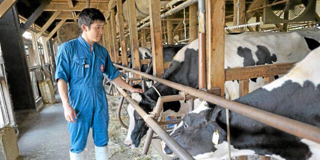 Avtal med USA kan krossa japanska lantbrukare