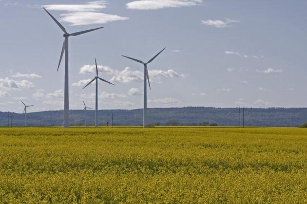 Närproducerat och inte bara livsmedel utan även el är efterfrågat säger branschen.
