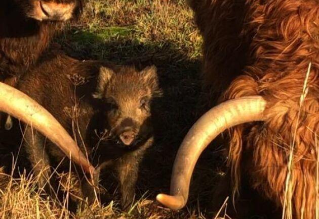 """""""Vi vet inte om det är en hane eller hona, men det lär väl visa sig med tiden"""", säger Carina Klahr om Pumba. Namnet kommer efter att någon kommenterade i sociala medier att kultingen såg ut som en Pumba."""
