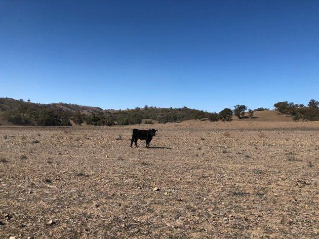 Rekordtorr vinter drabbar hela New South Wales. Knappt en tredjedel så mycket regn har fallit som under ett vanligt år.