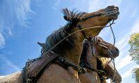 Enklare köpa hästdragna tjänster