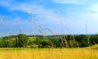 Bevara ängs- och betesmarker