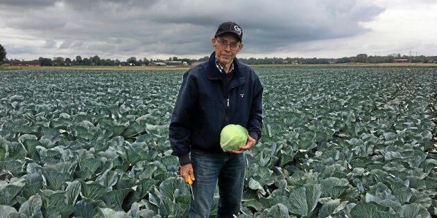 Torkan skapar brist på svenska grönsaker