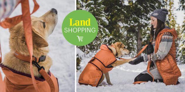 Ta hand om hunden i vinterkylan – här hittar du finaste tillbehören
