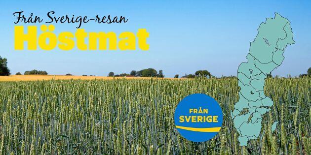 Höstmatens härliga smaker – från Sverige