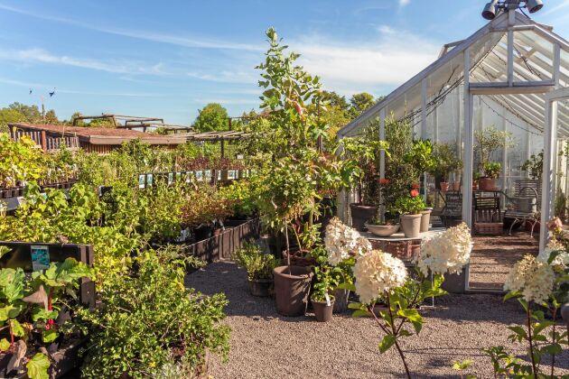 Är du ute på äventyr i huvudstaden är ett besök på Rosendals trädgård att rekommendera.