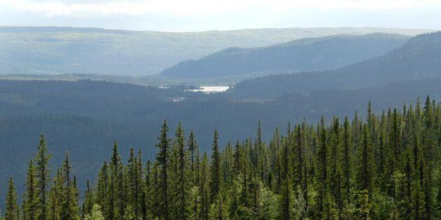 Fortsatt stort intresse att avverka i fjällnära skogar