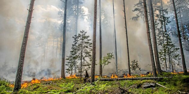 Ny skogsbrand i Sala
