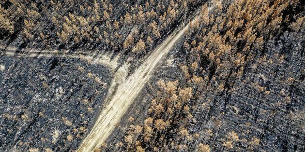 Brandpengarna på väg ut till skogsägarna