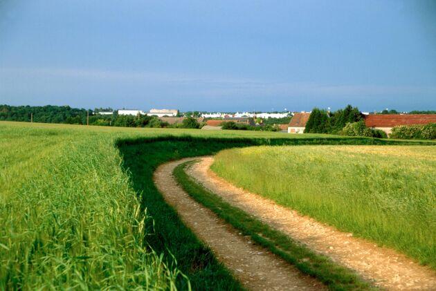 Egenföretagare på mellanstora gårdar är överrepresenterade i den franska självmordsstatistiken.