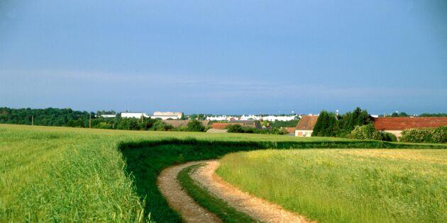 Högre risk för självmord bland franska lantbrukare