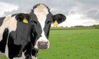 Krav på ursprungsmärkt mjölk döms ut