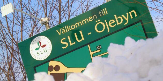 SLU säljer försöksgård i Öjebyn i Piteå