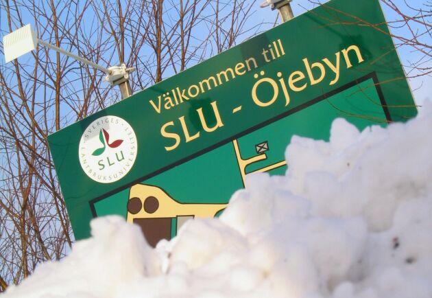 SLU:s försöksgård i Öjebyn ska säljas.