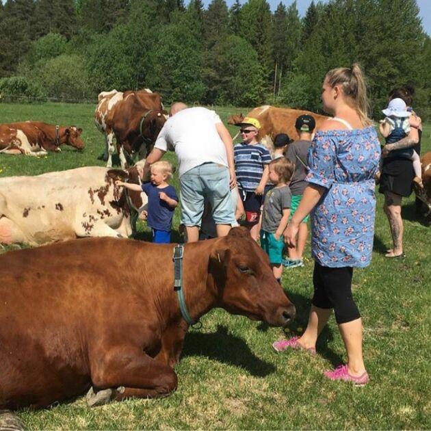 """Besökare hos Elin Torstenson. Vid sidan av mjölkförsäljningen erbjuder hon också den populära aktiviteten """"klappa en ko""""."""