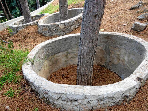 Skyddande ringar räddar träden från att kvävas.