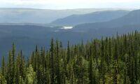 Domar om fjällnära skog överklagas