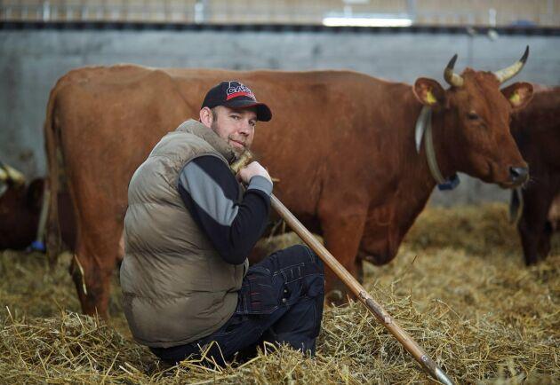 I dag har Holger van der Woude ett 70-tal mjölkkor av rasen Brown Swiss.