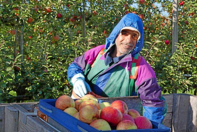Mahmoud Abdulbaki har jobbat på Gyegården i över ett år och trivs med jobbet. I Syrien drev han själv en fruktodling.