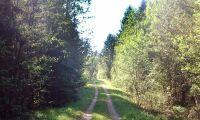 Virkesrik skogsfastighet till salu