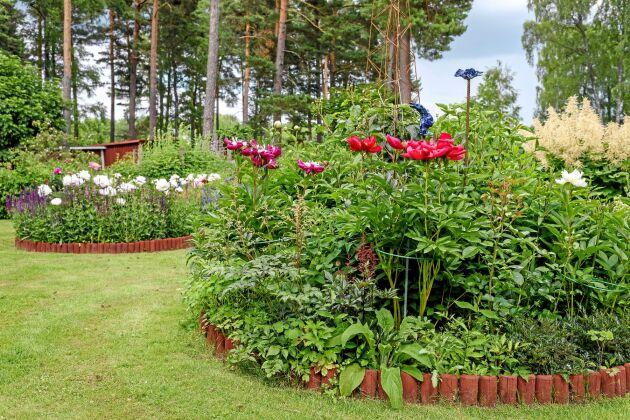 För att göra trädgården mer spännande har Sivan och Uffe byggt upp geometriska former av alla dess slag. Och det ska uppstå en nyfikenhet var alla gångar leder. De vita pionerna till vänster heter White Cup och de röda till höger Red Charm.