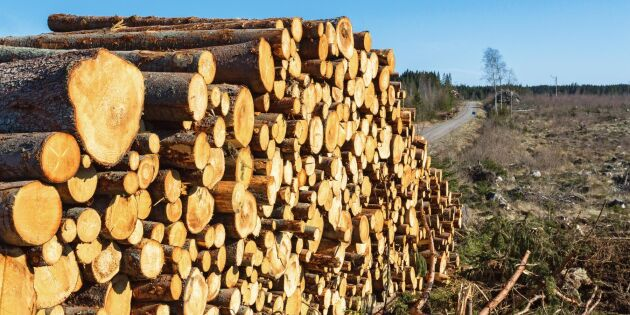 Skogsindustrin ökar trots ekonomisk avmattning