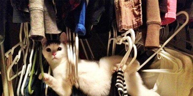 15 katter som genast ångrat sina dåliga livsval