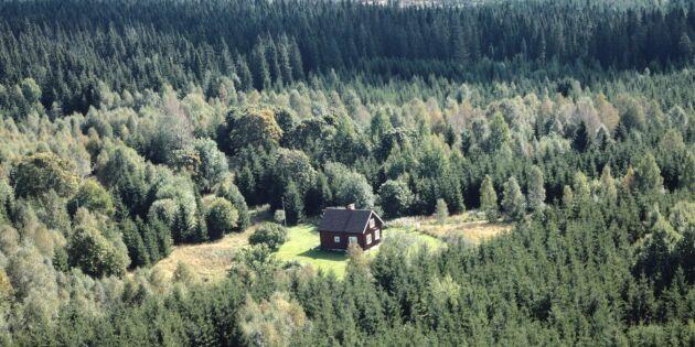 Fler vill köpa skog – men lönsamheten faller