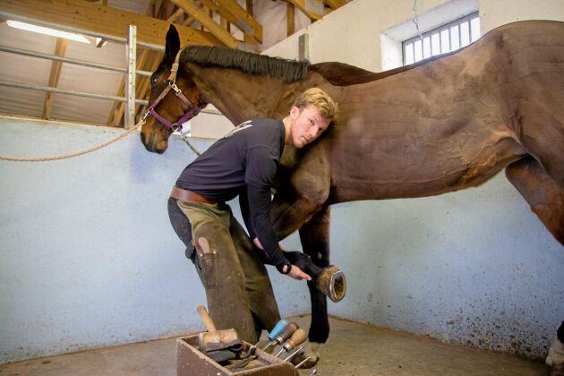 Att lära sig läsa hästens signaler är viktigt för att kunna bli en bra hovslagare, berättar Jonatan Olsson.