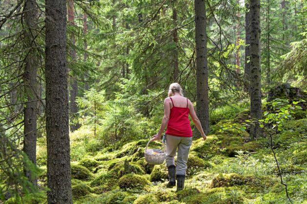Ska du ge dig ut i skogen i okända marker – då är det bra att tänka på några saker.