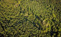 """Replik: """"Låt skogsägaren avgöra vilken skog som ska skyddas"""""""