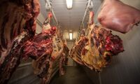 Framtidstro störst inom kött och förädling