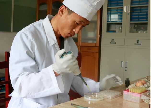 En forskare undersöker den afrikanska svinpesten i distriktet Ryongsong i Nordkoreas huvudstad Pyongyang.