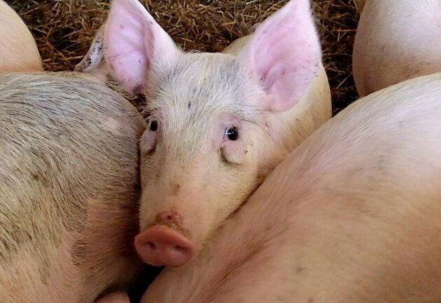 Nu kan du lämna synpunkter på hur EU jobbar med djurvälfärd.