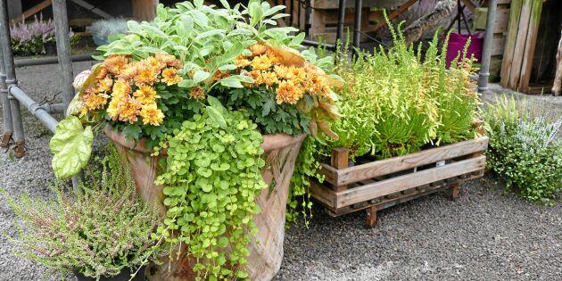 Inspiration för din trädgård: 10 vackra höstkrukor