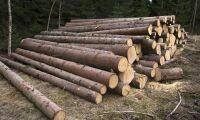 """""""Därför har skogen en viktig roll i klimatdebatten"""""""