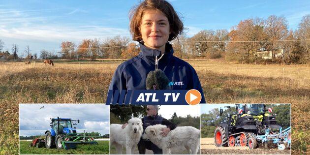 ATL TV: Hundar skyddar mot rovdjur