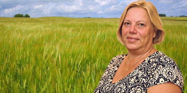 """Drömmen om en ungersk kornbod"""