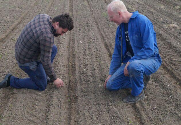 André Andersson är maskinförare på Bengt Nilssons Maskinstation som sår omkring 800 hektar majs varje år. Det är första gången han varit med om att så fältet en andra gång.