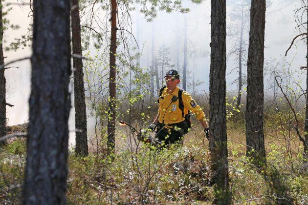 """Mats Harrysson, naturvårdshandläggare och biolog på Länsstyrelsen, """"in action"""" på naturvårdsbränningen i Skommarmossen i mitten av maj. Bränningen var årets första i Västmanland och det planeras för fler framöver."""