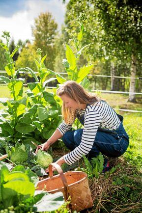 Sara kunde inget om odling först, men har lärt sig genom att lyssna på poddar och gå en kurs.
