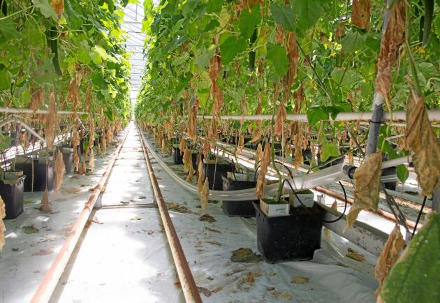Ren koldioxid från industrin används som gödning.