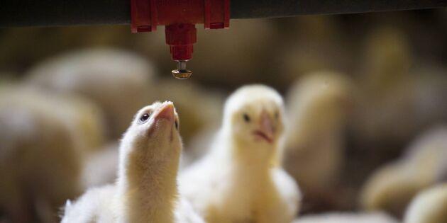 Kycklingjätte köper irländsk producent