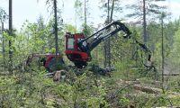 Avverkningar sänker Finlands kolsänka